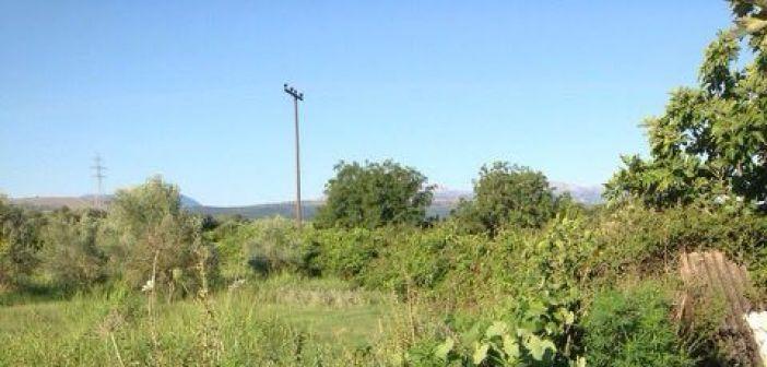 Εντοπίστηκαν δύο φυτείες δενδρυλλίων κάνναβης σε περιοχές της Πάργας