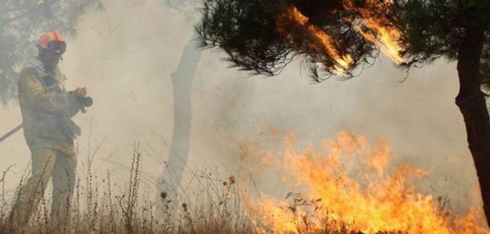 Φωτιές από την Αλβανία πέρασαν στην Θεσπρωτία