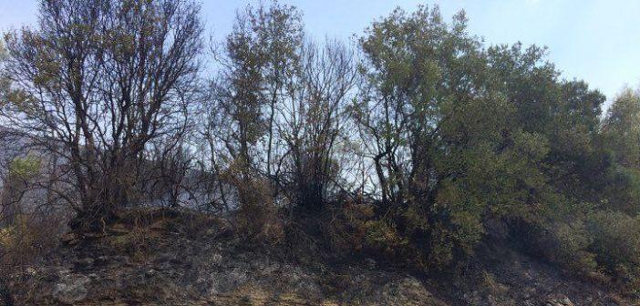 Φωτιά στη Βουνοπλαγιά, επιχειρούν ισχυρές δυνάμεις (ΔΕΙΤΕ ΦΩΤΟ)