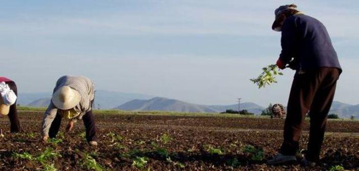 Επιδότηση έως 5.000 ευρώ για πληττόμενους αγρότες – Ποιοι θα πάρουν τα χρήματα