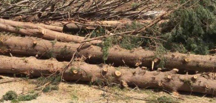 Οι εργασίες κοπής δέντρων στο κάστρο της Ναυπάκτου έφεραν σειρά ερωτημάτων
