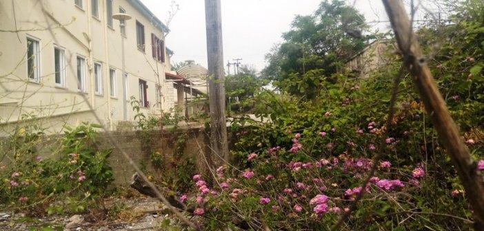 «Ζούγκλα» το παλιό νοσοκομείο του Αγρινίου (ΔΕΙΤΕ ΦΩΤΟ)