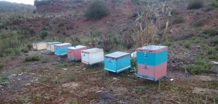 Αιτωλοακαρνανία: Σήμα κινδύνου εκπέμπουν οι μελισσοκόμοι