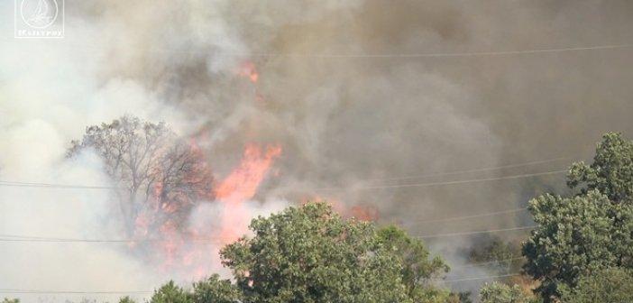 Τουλάχιστον 50 στρέμματα έγιναν στάχτη από την πυρκαγιά στον Τρύφο Ξηρομέρου