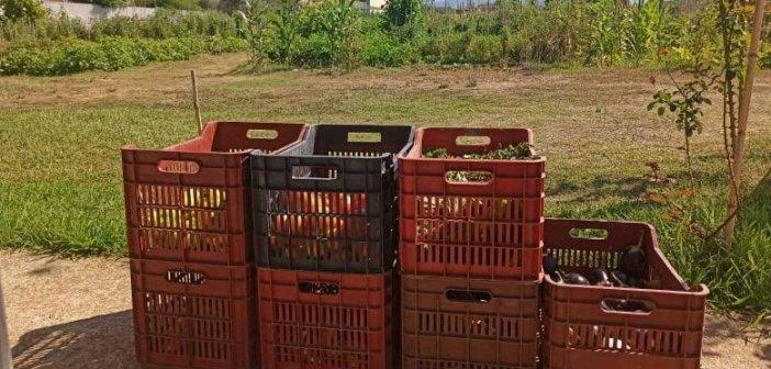 Διάθεση κηπευτικών προϊόντων από τους ωφελούμενους του Δημοτικού Λαχανόκηπου του Δήμου Αγρινίου στο Κοινωνικό Παντοπωλείου (ΔΕΙΤΕ ΦΩΤΟ)