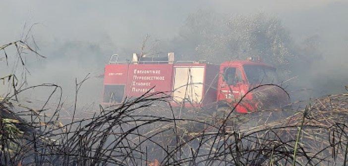 Καινούργιο: Πυρκαγιές απειλούν λιοστάσια (VIDEO + ΦΩΤΟ)