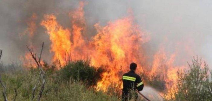 Άγιος Νικόλαος Βόνιτσας: Μεγάλη κινητοποίηση της Πυροσβεστικής για φωτιά