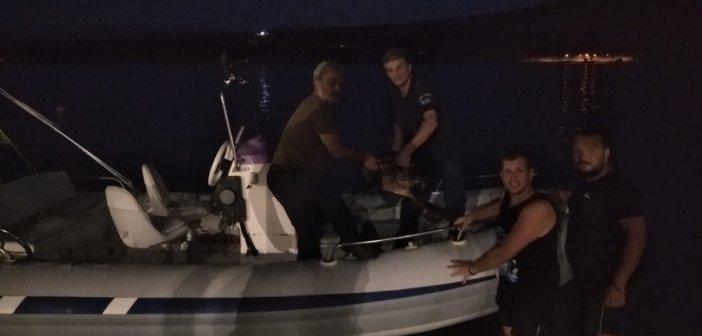 Αμφιλοχία: Διάσωση θαλάσσιας χελώνας από το Λιμενικό (φωτο)