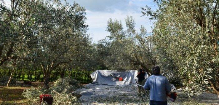 Ένωση Αγρινίου: Ξέμεινε από εργάτες γης η Αιτωλοακαρνανία