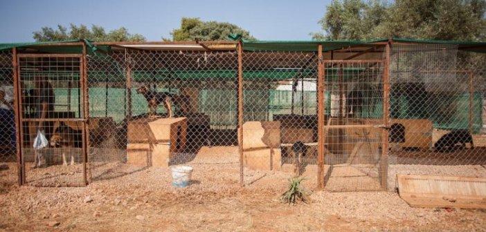 Ο Δήμος Αγρινίου κατασκευάζει καταφύγιο για τα αδέσποτα ζώα