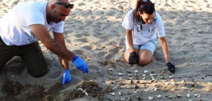 Γεννητούρια χελωνών Carettaσε Λούρο και Κοκκάλα (ΔΕΙΤΕ ΦΩΤΟ)