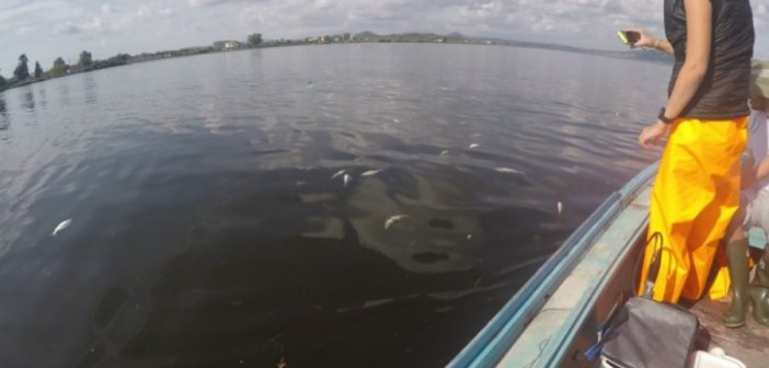 Λιμνοθάλασσα Αιτωλικού: Εκατοντάδες νεκρά ψάρια από τον «Ιανό»