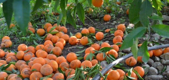Κακοκαιρία «Ιανός»: Εως 16 Νοεμβρίου οι δηλώσεις αγροτών για αποζημιώσεις -Η διαδικασία