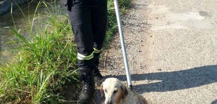 Αγρίνιο: Η Πυροσβεστική έσωσε σκύλο από αρδευτικό κανάλι (ΔΕΙΤΕ ΦΩΤΟ)