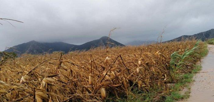 «Ιανός» – Αιτωλοακαρνανία: Στο 95% οι εκτιμήσεις των ζημιών