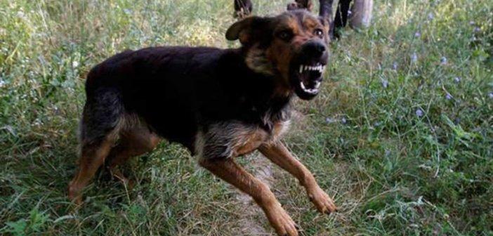 Σοκ στην Εύβοια: Σκυλιά κατασπάραξαν 60χρονη