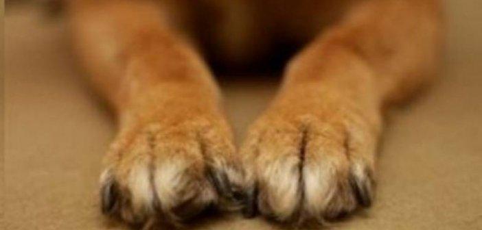 Δυτική Ελλάδα: ΣΟΚ για Πατρινό επιχειρηματία! Βρήκε τον σκύλο του μαχαιρωμένο… Η οικογένεια δίνει αμοιβή για οποιαδήποτε πληροφορία