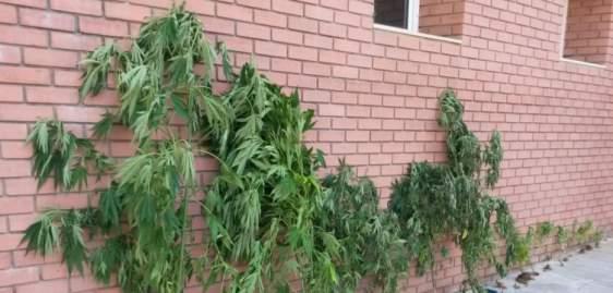 Βόνιτσα: Καλλιεργούσε χασίς στο σπίτι