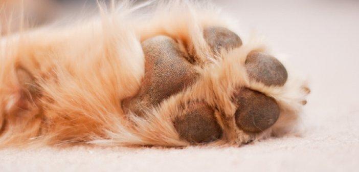 Αμφιλοχία: Θάνατος σκύλου από φόλα