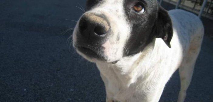 Παρέμβαση του αρχηγού της ΕΛΑΣ για φόνο αδέσποτης σκυλίτσας στο Αγρίνιο