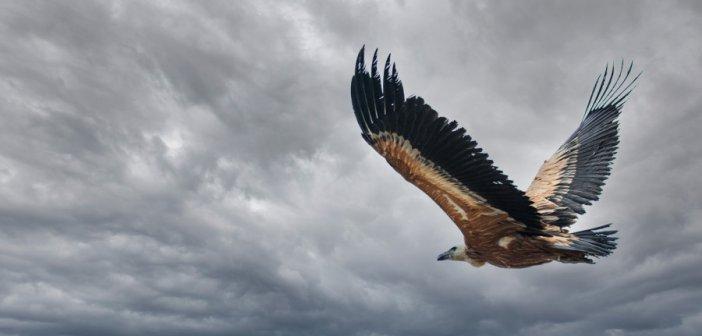 Διάκριση Αιτωλοακαρνάνων φωτογράφων σε διαγωνισμό για τις περιοχές Natura