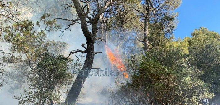 Πυρκαγιά στο Τρίκορφο Ναυπακτίας (VIDEO)