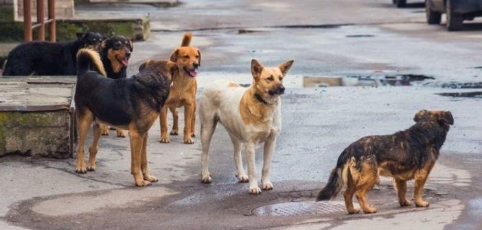 Συνελήφθη στο Αγρίνιο – Είχε πέντε σκύλους χωρίς να τηρεί τους κανόνες ευζωίας