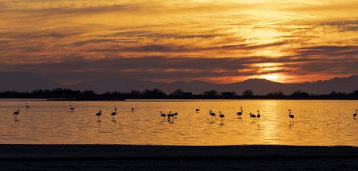 """Μεσολόγγι: Συγχαρητήρια στον Γιώργο Ντέκα  για τη διάκρισή του στον φωτογραφικό διαγωνισμό """"Click στη φύση"""" της WWF Ελλάς"""