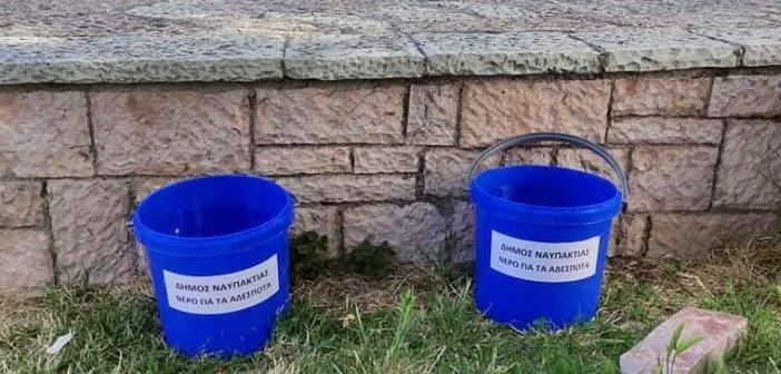 """Ο δήμος Ναυπάκτου τοποθέτησε χθες 15 κουβάδες νερού για τα αδέσποτα και """"κάποιοι"""" έκλεψαν 5 απ'αυτούς"""