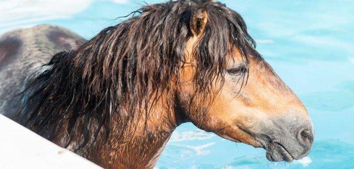 Κεφαλονιά: Άλογο έπεσε σε πισίνα ξενοδοχείου – Επιχείρηση για τη διάσωσή του