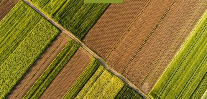Μηνιαίο Ενημερωτικό Δελτίο Τιμών Αγροτικών Προϊόντων από την Τράπεζα Πειραιώς – Ιούνιος 2021
