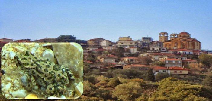 """Κατούνα Αιτωλοακαρνανίας: Κι όμως """"έβρεξε""""… βατράχια!"""