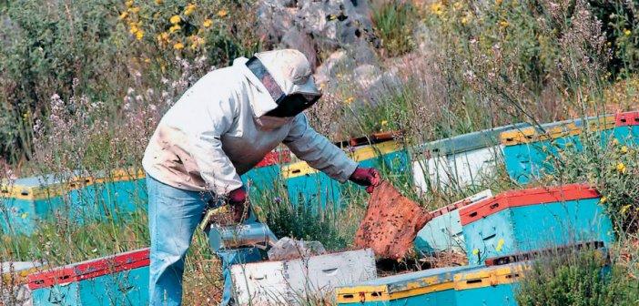 Απαγόρευση κυκλοφορίας στα δάση: Χαριστική βολή για την μελισσοκομία στην Αιτωλοακαρνανία