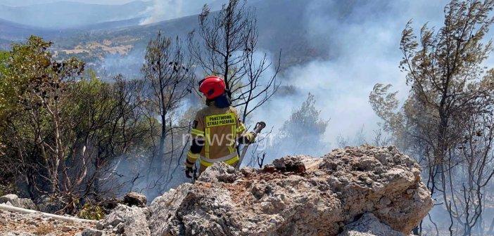 Φωτιά στα Βίλια: Από ένα κούτσουρο πεύκου ξεκίνησαν όλα (ΦΩΤΟ +VIDEO)