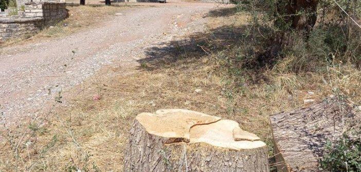 Αντιδράσεις κατοίκων στη Δάφνη για την κοπή δέντρων