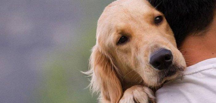 Νομοσχέδιο για τα ζώα συντροφιάς: Αντιδράσεις από τους φιλόζωους και στο Αγρίνιο