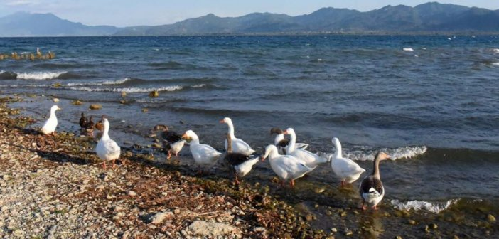 Η λίμνη Τριχωνίδα φόρεσε τα «φθινοπωρινά» της (ΦΩΤΟ)