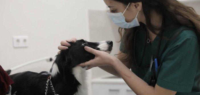 Ζώα συντροφιάς: Βελτιώσεις από τον Στέλιο Πέτσα στο νομοσχέδιο